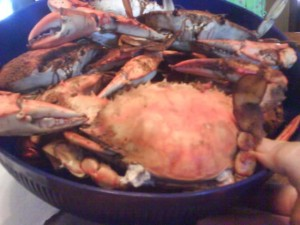 Cooked blue crab with old bay seasoning, fresh from the sea of cortez